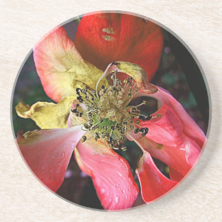 Stunning Delicate Weathered Winter Red Rose Sandstone Coaster