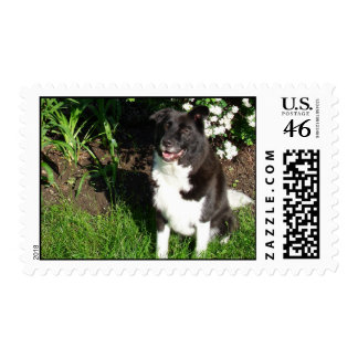 Stunning Dog Stamps