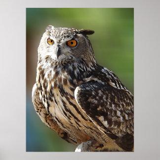 Stunning Eagle Owl with Orange Eyes Posters