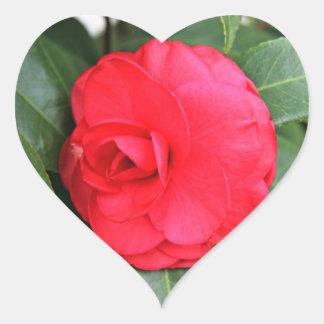 Stunning Elegant Pink Red Camellia Flower Heart Sticker