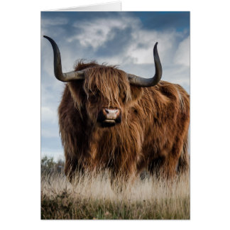 Stunning highland bull in a meadow card