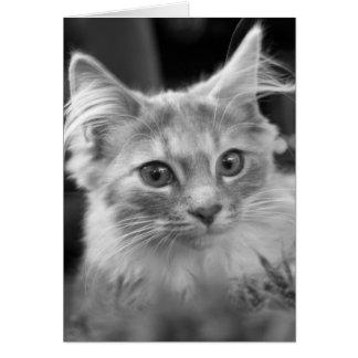 stunning kitten greeting card