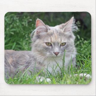 stunning kitten mousepad