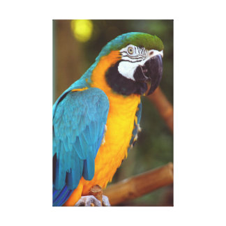 Stunning Macaw Canvas Print