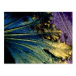 Stunning Macro Of Leaf Postcard