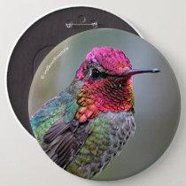 Stunning Male Anna's Hummingbird on the Plum Tree Button