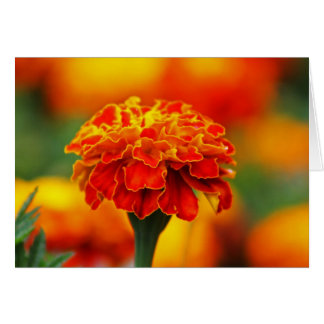 Stunning Orange Marigold Card