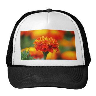 Stunning Orange Marigold Mesh Hat