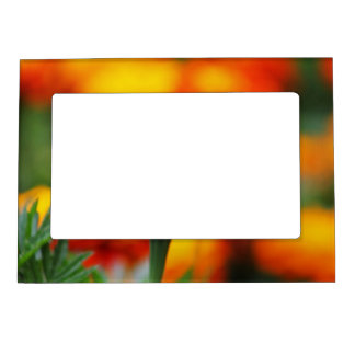 Stunning Orange Marigold Magnetic Photo Frame