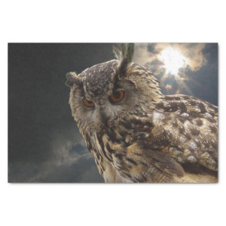Stunning Owl Photography Series Tissue Paper