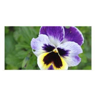 stunning pansy flower card
