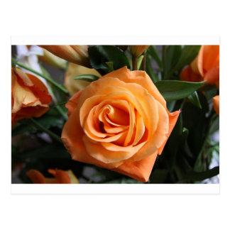 Stunning Peach Rose Postcard