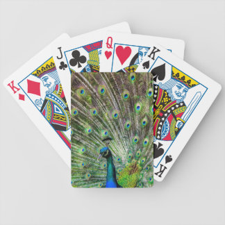 Stunning Peacock  and feathers photo accessories Bicycle Playing Cards