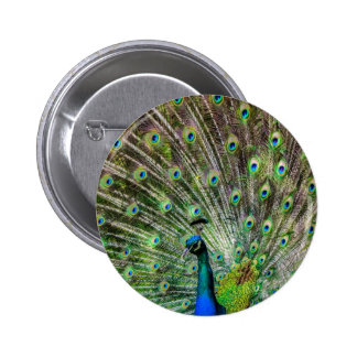 Stunning Peacock  and feathers photo accessories Pinback Buttons