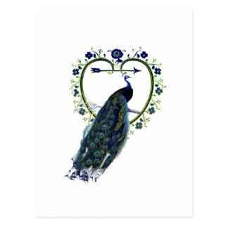Stunning Peacock and ornate heart flower frame Postcard