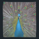 """Stunning Peacock Bandana<br><div class=""""desc"""">This bandana features a gorgeous peacock who lives at Chatfield Hollow Farm in Killingworth,  Connecticut. This farm is also a bed and breakfast... .an amazing beautiful and interesting place to stay while visiting Connecticut attractions.  chfbandb.com and chatfieldfarm.com</div>"""