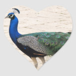 Stunning Peacock Heart Stickers