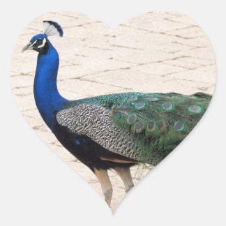 Stunning Peacock Heart Stickers