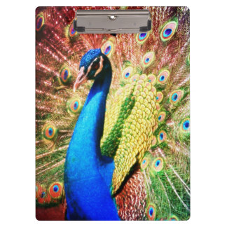 Stunning Peacock Photo Clipboard
