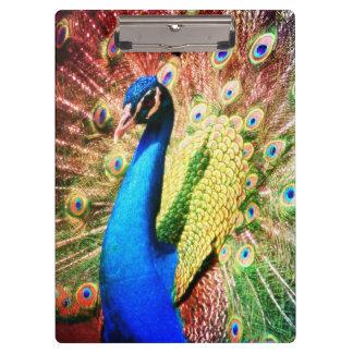 Stunning Peacock Photo Clipboards