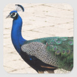 Stunning Peacock Square Stickers