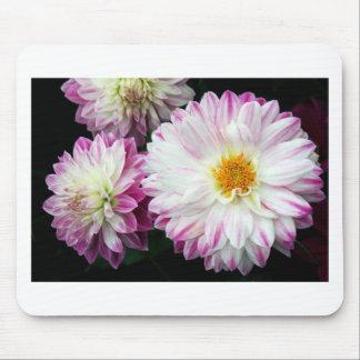 Stunning pink dahlia print mouse pad