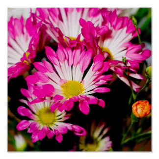 Stunning pink flowers poster