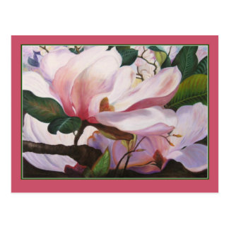 Stunning Pink Magnolia Blossoms Postcard