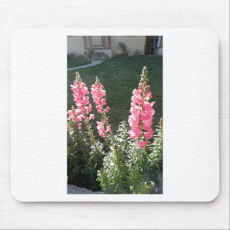Stunning Pink Snapdragons Mouse Pad
