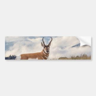 Stunning Pronghorn Bumper Sticker