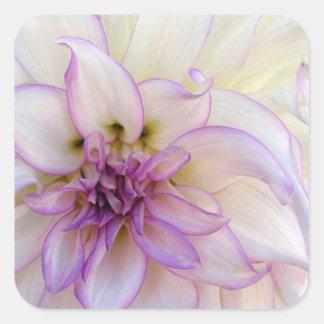 Stunning Purple and White Dahlia Flower Square Sticker