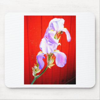 Stunning Purple Bearded Iris in Red Mouse Pad