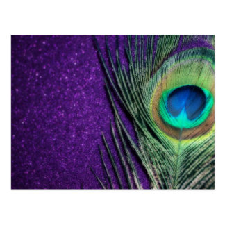 Stunning Purple Peacock Postcard