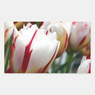 Stunning red and white tulip print rectangular sticker
