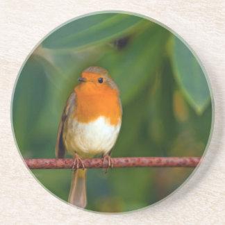 Stunning red Robin bird photo accessories Xmas Coaster