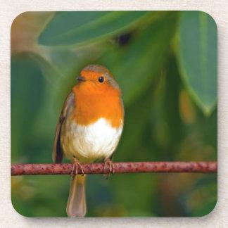 Stunning red Robin bird photo accessories Xmas Drink Coasters
