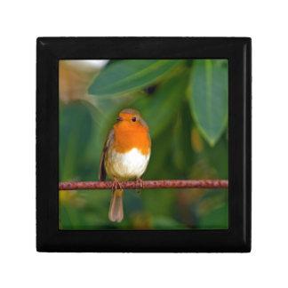 Stunning red Robin bird photo accessories Xmas Trinket Box