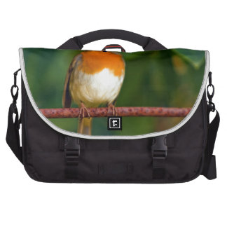 Stunning red Robin bird photo accessories, Xmas Computer Bag