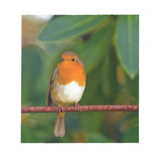 Stunning red Robin bird photo accessories Xmas Scratch Pads