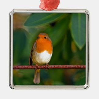 Stunning red Robin bird photo accessories Xmas Ornaments