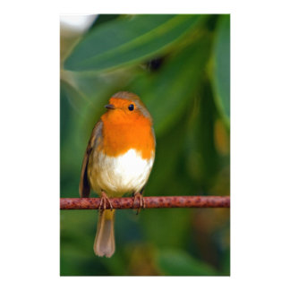 Stunning red Robin bird photo accessories Xmas Personalized Stationery