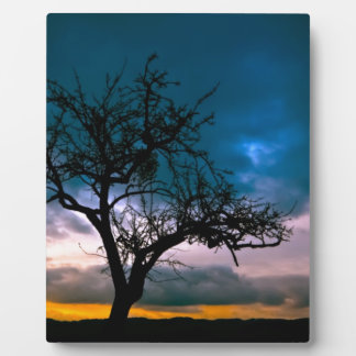 Stunning scenery - tree silhouette, sunset, moody display plaques