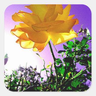 Stunning Singular Orange Thorned Rose Against Sky Square Sticker