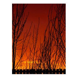 Stunning Sunset Post Cards