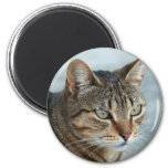 Stunning Tabby Cat Close Up Portrait 2 Inch Round Magnet