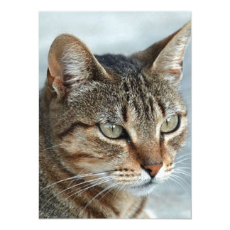 Stunning Tabby Cat Close Up Portrait Card