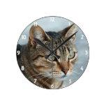 Stunning Tabby Cat Close Up Portrait Round Wall Clocks
