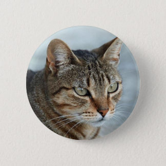 Stunning Tabby Cat Close Up Portrait Pinback Button
