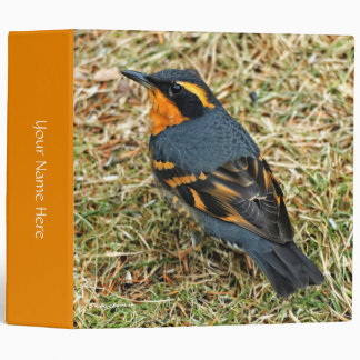 Stunning Varied Thrush on the Lawn 3 Ring Binder