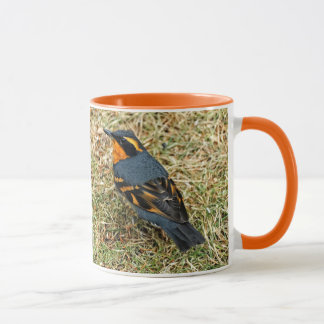 Stunning Varied Thrush on the Lawn Mug